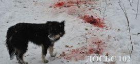 <strong>У лісі біля Тернополя собаки відгризли голову жінці (ФОТО)</strong>