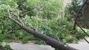 дерево, падіння