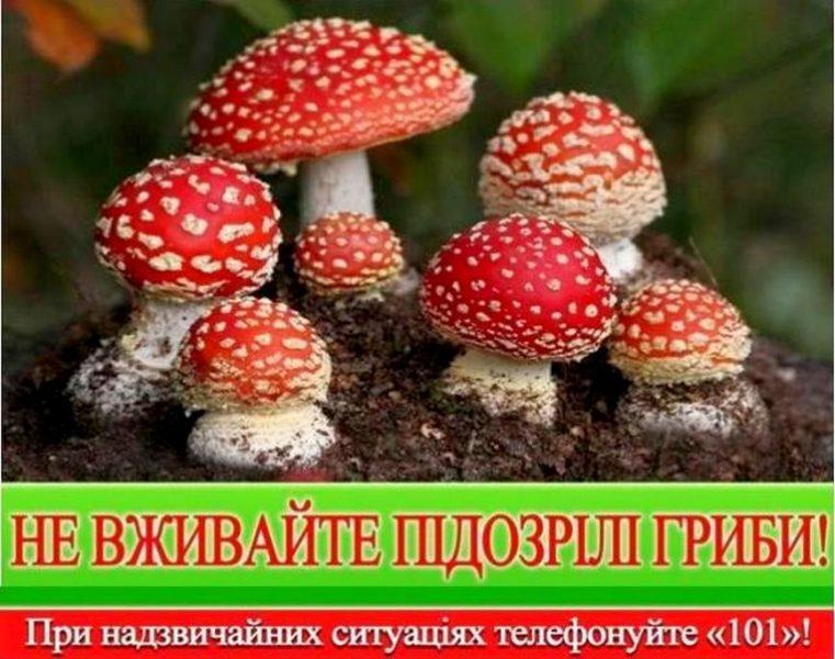 Картинки по запросу отруєння грибами