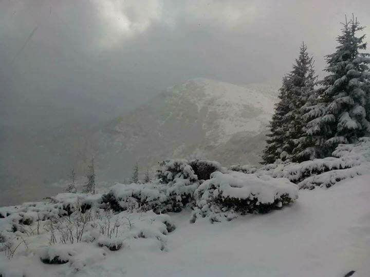 Карпати сніг