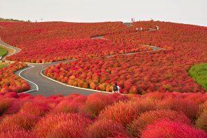 Парк Hitachi, Японія