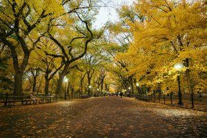 Центральний парк, Нью-Йорк