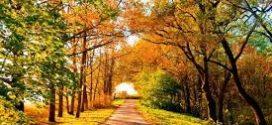 Вересень тішить: завтра в Україні буде сонячно та тепло
