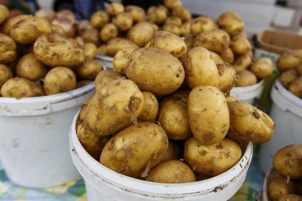 """Результат пошуку зображень за запитом """"картопля"""""""