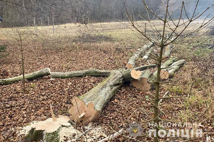 дерево, вирубка
