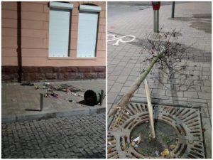 зламане дерево, вулиця Чорновола