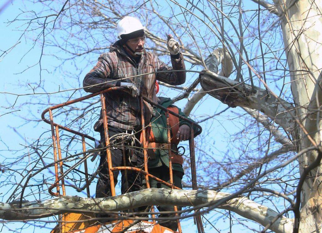 обрізання дерев у Тернополі