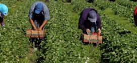 У Польщі на фермі 19 українських заробітчан захворіли на коронавірус