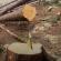 На Тернопільщині біля лікарні вирубали дерева: з'ясовують чи законно