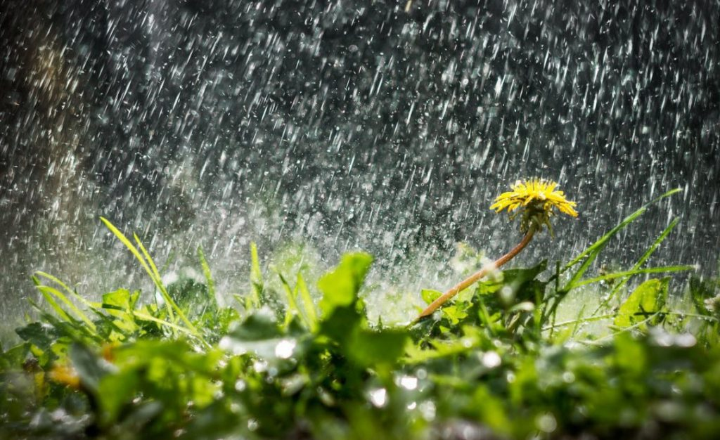 дощі у травні
