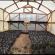 На Чортківщині закохані студенти вирощують лавандове поле (ВІДЕО)