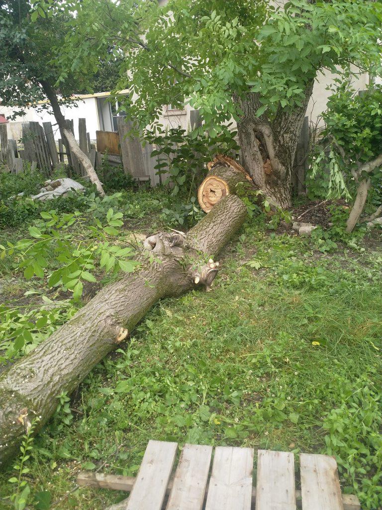повалені дерева, новини Тернопільщини