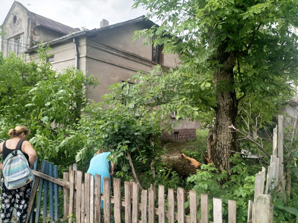 впало дерево, новини тернопільщини