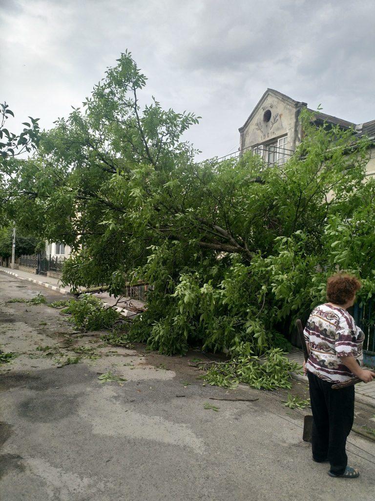 повалене дерево, буревій, тернопільські новини