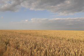 Погода на Тернопільщині у вихідні: спекотно, місцями – грози