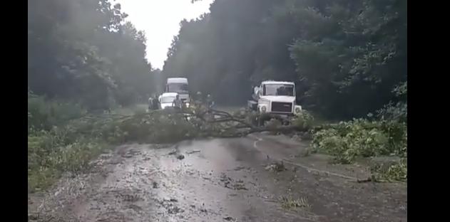повалене дерево, новини Тернопільщини