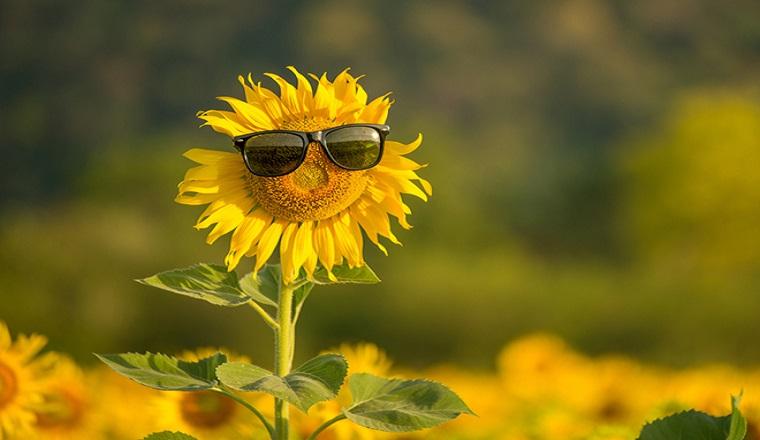 погода, літо