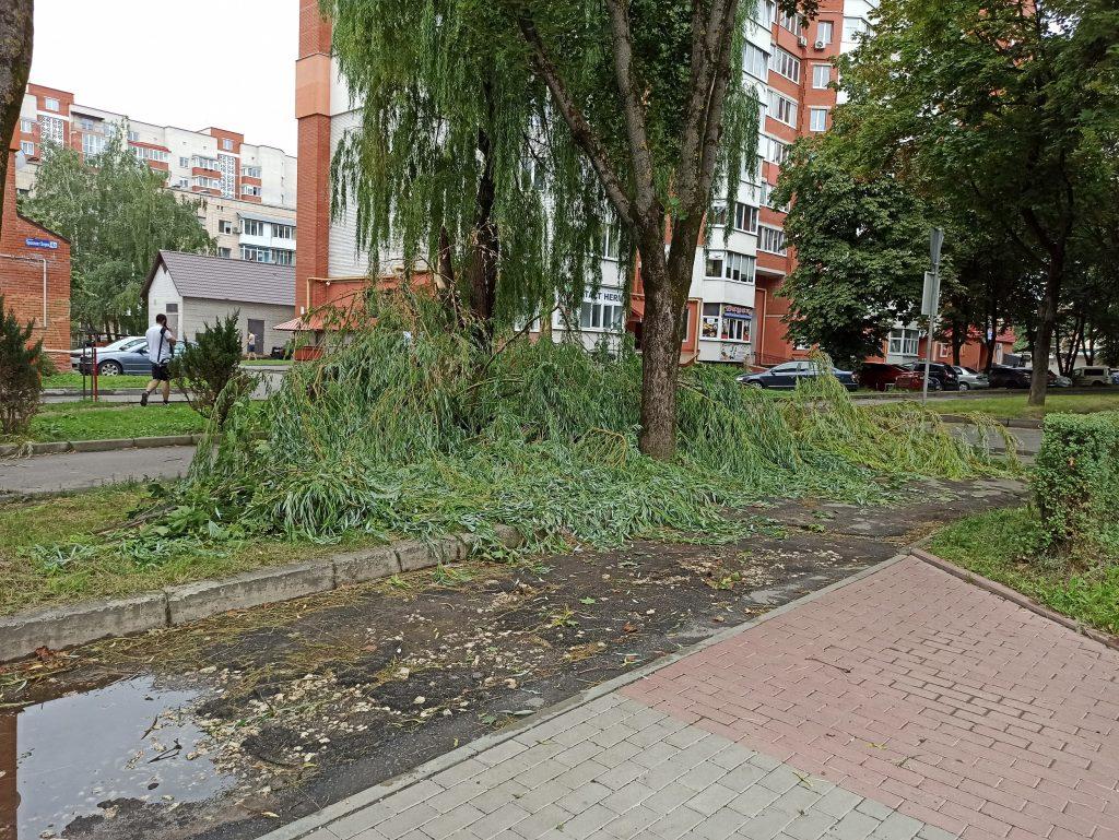 Тернопіль, вітер, повалені дерева