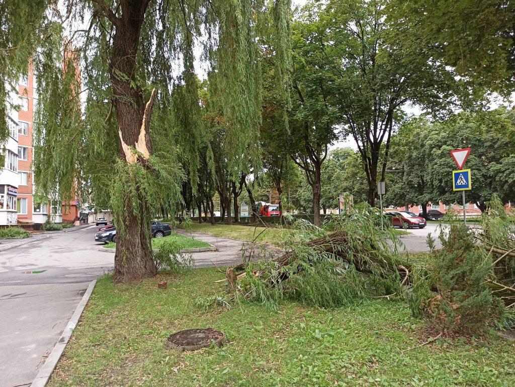 повалені дерева, Тернопіль
