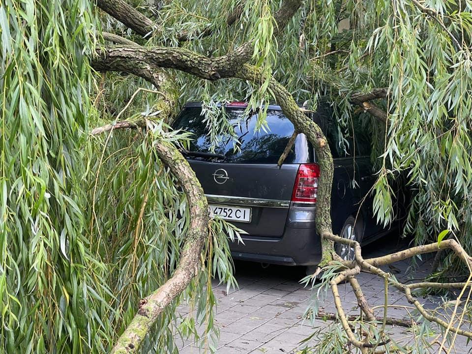 повалені дерева, новини Тернополя