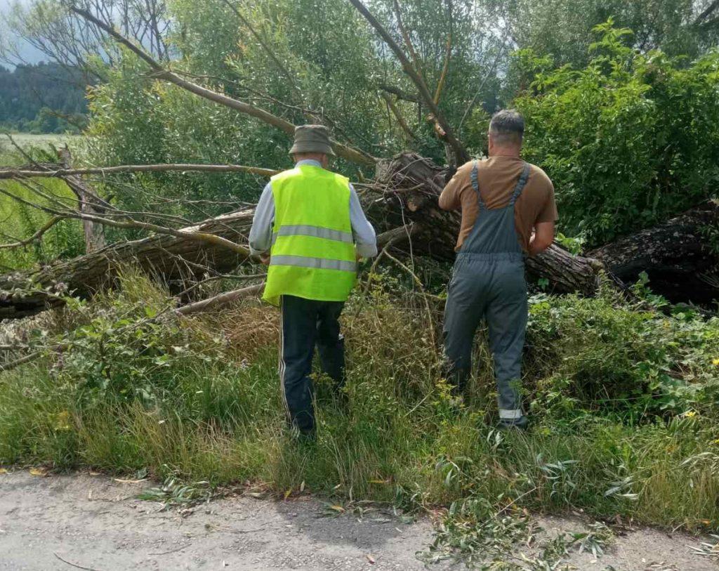 повалені дерева на Тернопільщині