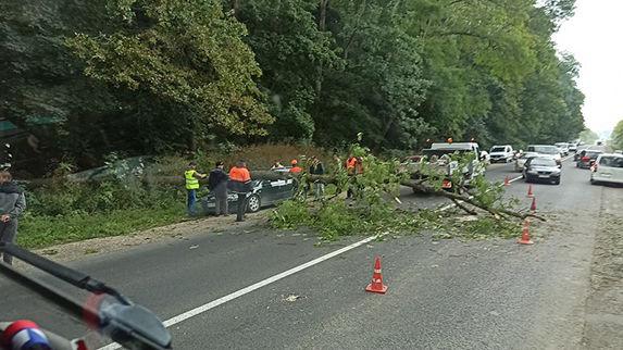 дерево впало на автомобіль